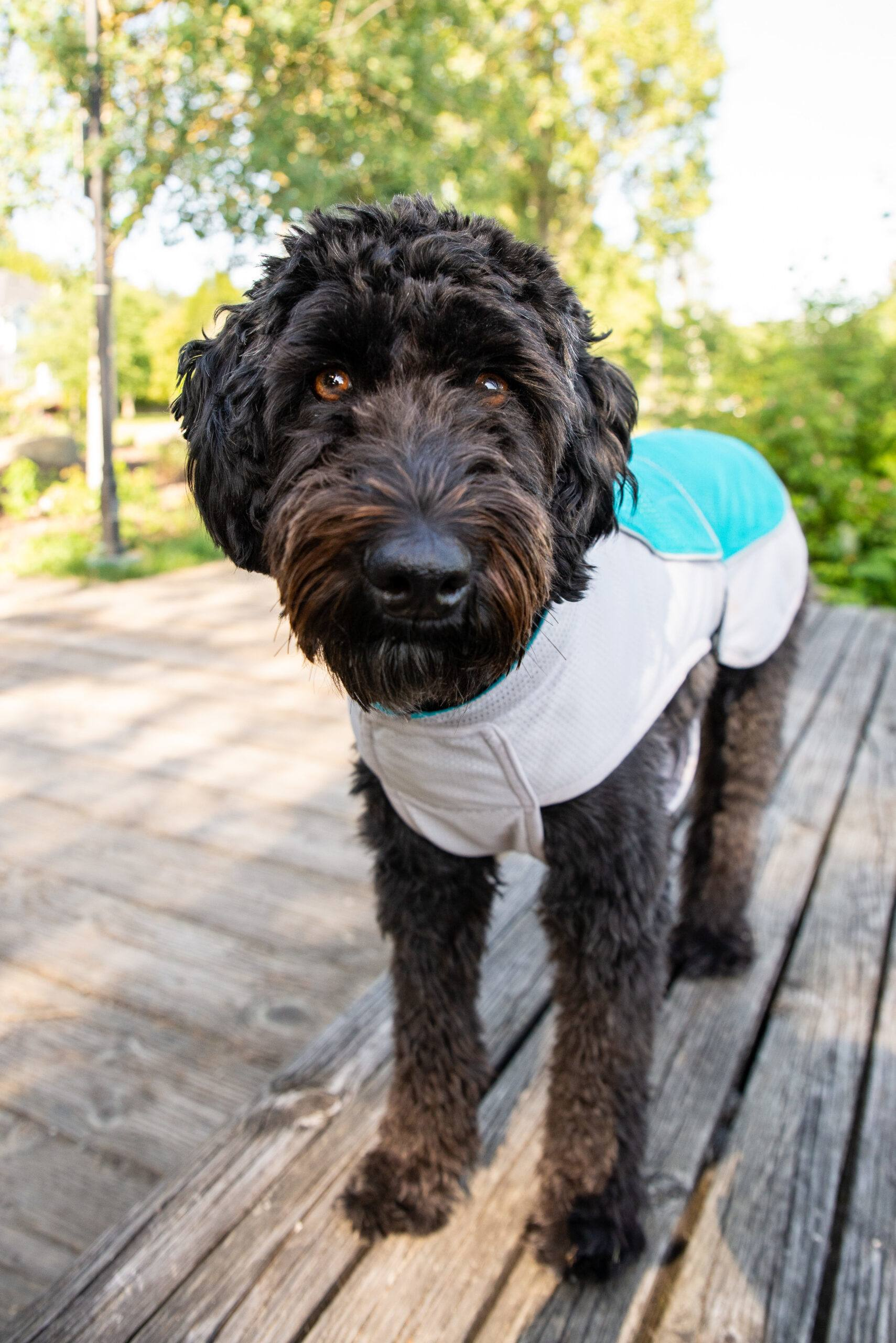 Make Custom-Fit DIY Dog Coats