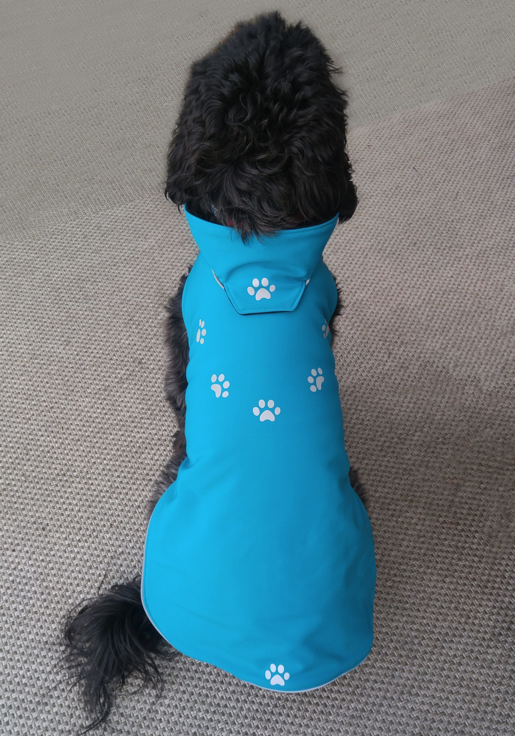 Scout in custom fit dog coat
