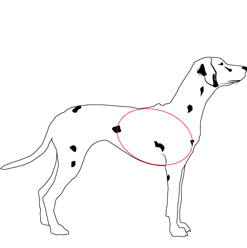 Deep Chested Dog Side View