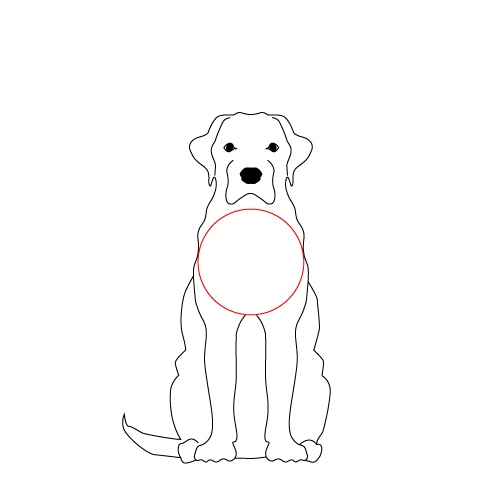 Round Chested Dog Front View