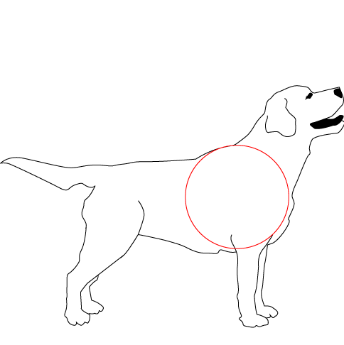 Round Chested Dog Side View