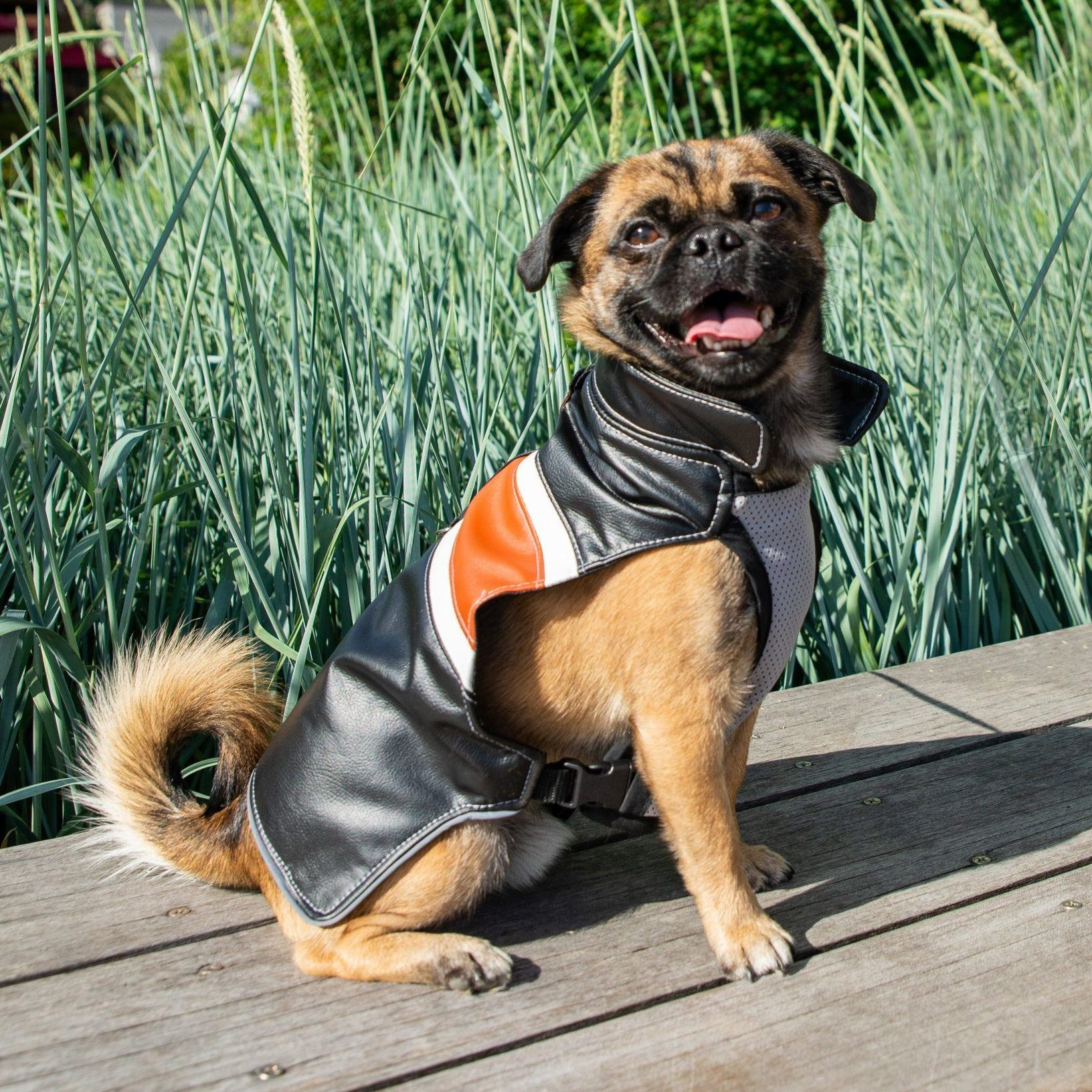 Dog in water resistant leather jacket