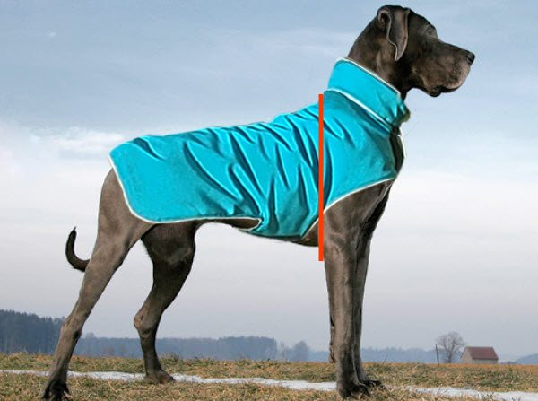 Withers Position When Measuring For a Dog Coat